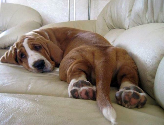Most Laid-back Dogs